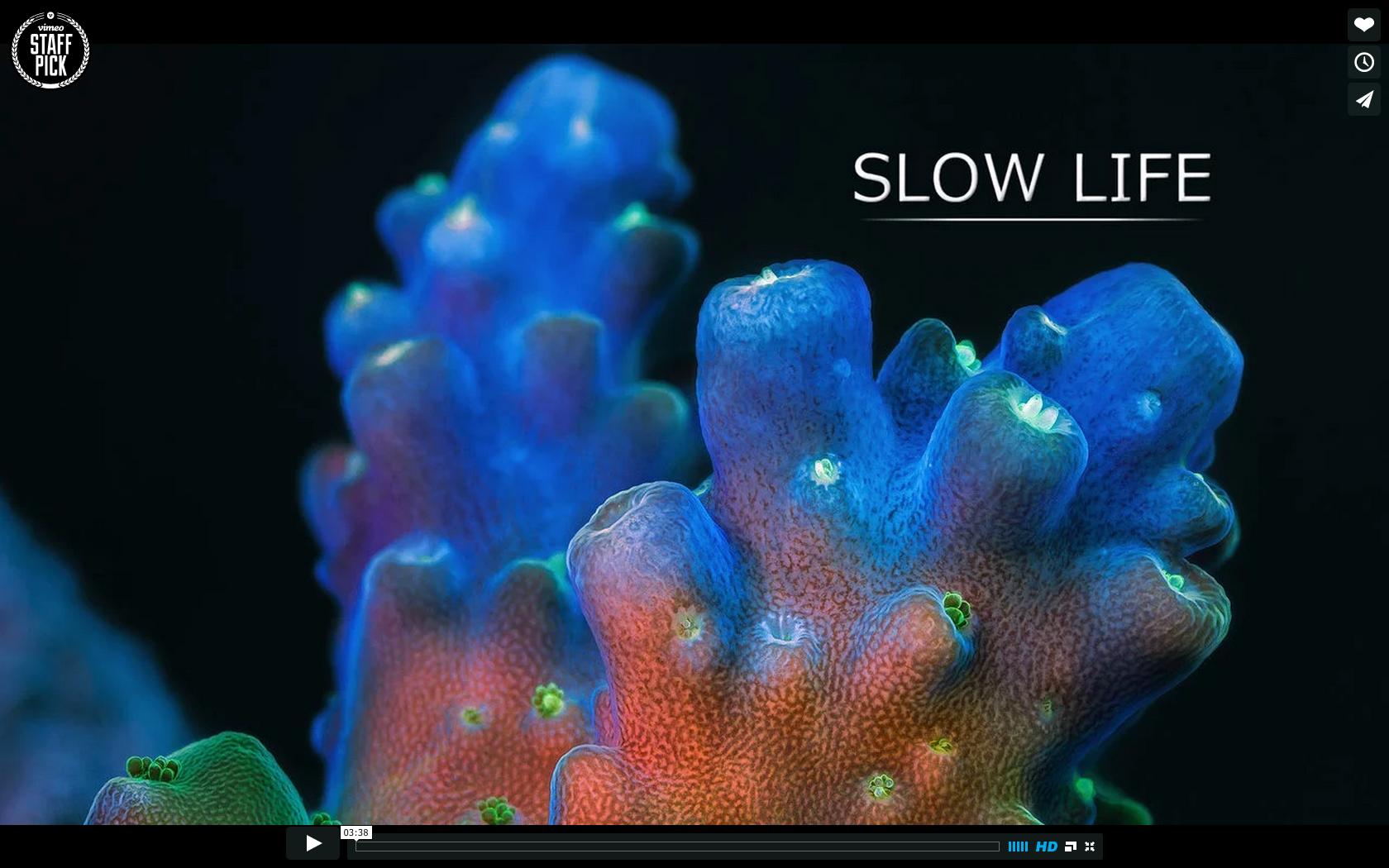 Slow life un film timelapse marin sur le corail